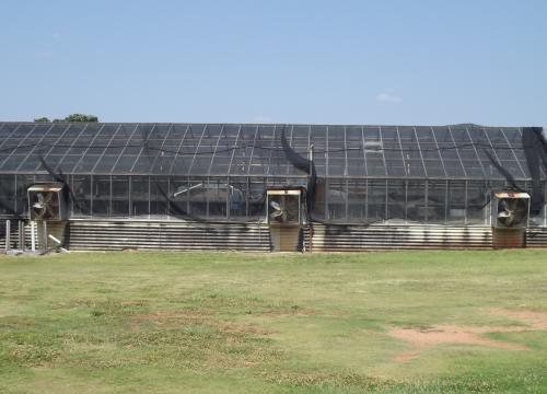 Horticulture Greenhouse