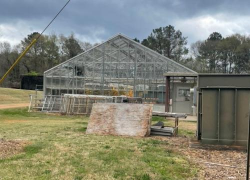 Lath Greenhouse 3 Botany