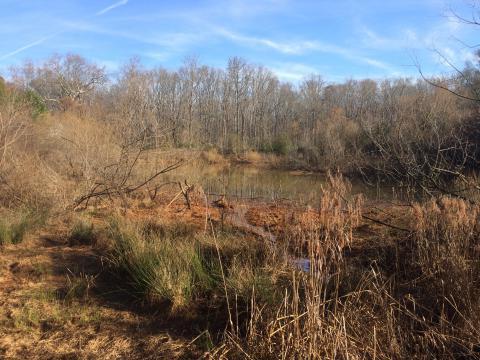 Herrick Upper Pond Parvo Watershed UGA Architects Restoration