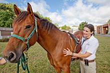 Veterinary Horse